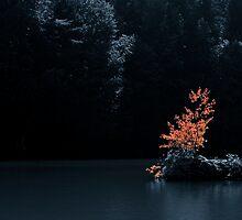 Autumn Elements by Anne Schwaderer