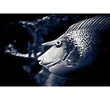 Unicorn Fish Photographic Print