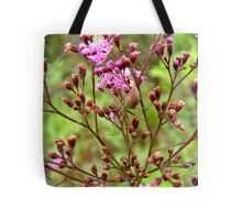 Lynx Spider in the Pink Tote Bag