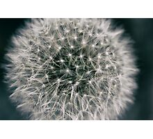 Details of a Dandelion Photographic Print