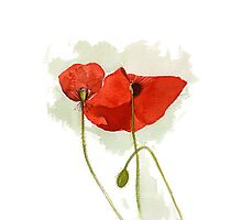 Watercolour Illustration of Red poppies Photographic Print