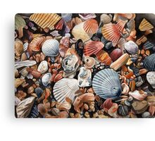 Original detailed watercolor illustration of an array of shells. Canvas Print