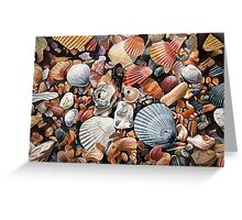 Original detailed watercolor illustration of an array of shells. Greeting Card