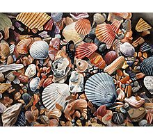 Original detailed watercolor illustration of an array of shells. Photographic Print