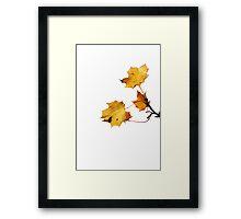 Last Golden Autum leaves Framed Print