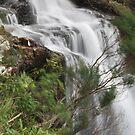 Waterfalls at Springbrook, QLD by Lozzar Landscape