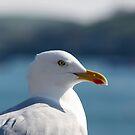 Seagull by naffarts