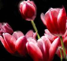 STARRED PINK TULIPS by pjm286