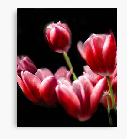 STARRED PINK TULIPS Canvas Print