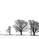 trees by Danielle  Jane