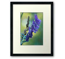 Dew Covered Wild Lupine Framed Print