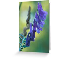 Dew Covered Wild Lupine Greeting Card