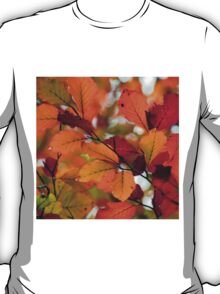 COLORFUL AUTUMN T-Shirt