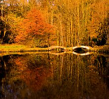 Sunnyhurst Woods, Darwen, Lancashire by Stephen Knowles