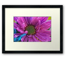 Spring daisies 1 Framed Print