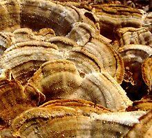 Fungus by Sanguine