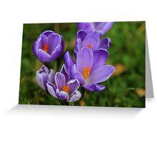 Purple Spring Crocuses Greeting Card