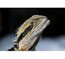Dragons are real Photographic Print