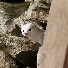 White Weasel 2 by tayja