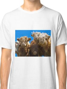 Friendly curious highland cattle Classic T-Shirt