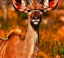 Young Kruger Kudu by Nicolas Raymond
