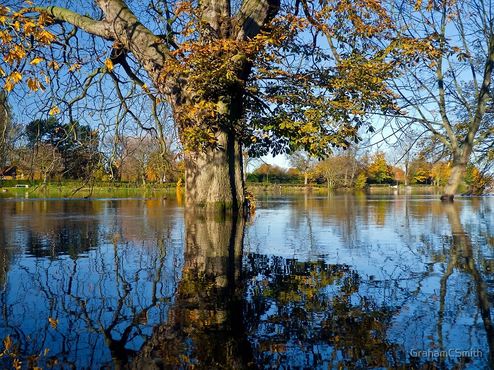 Horse Chestnut in the flooded River Ouse, York, England by GrahamCSmith
