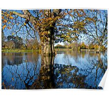 Horse Chestnut in the flooded River Ouse, York, England Poster