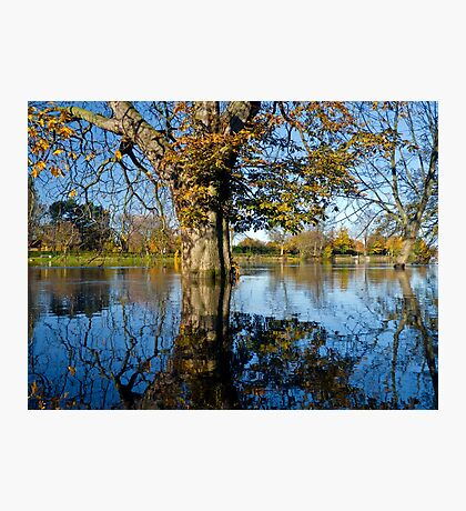 Horse Chestnut in the flooded River Ouse, York, England Photographic Print