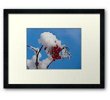 Winter Berries in Snow Framed Print