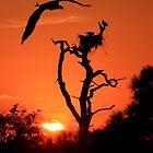 RETURNING-BALD-EAGLE by TomBaumker