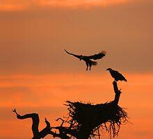 EAGLE LANDING by TomBaumker