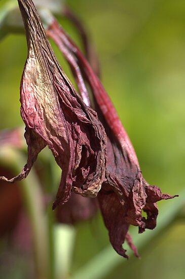 Purple Death by Donna Adamski
