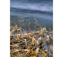 Slough Thaw Photographic Print