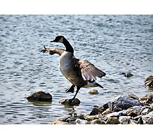 "The Karate ""Goose""? Photographic Print"
