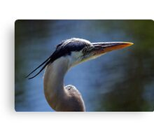 Great Blue Heron - Looking Away Canvas Print