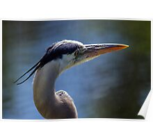 Great Blue Heron - Looking Away Poster