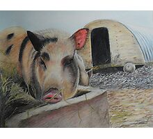 Greedy Pig Photographic Print