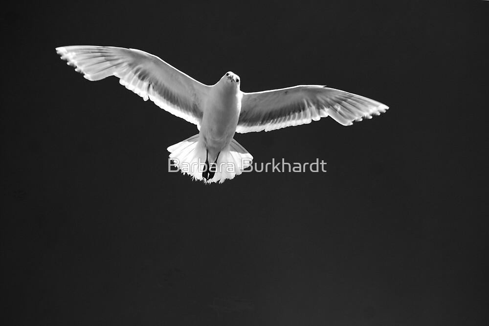 White Flight by Barbara Burkhardt