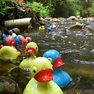 The big duck race  by Donovan Wilson