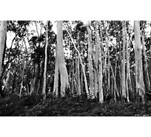 Forest Floor - Sinclair's Gully Photographic Print