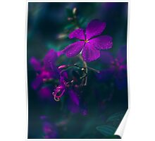 Purple Raindrops Poster