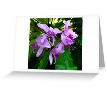 Australian Native Orchids. Greeting Card