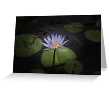 Mauve Water Lilly Greeting Card