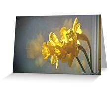 Morning Daffodils Greeting Card