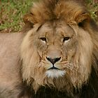 Lion Portrait by smallan