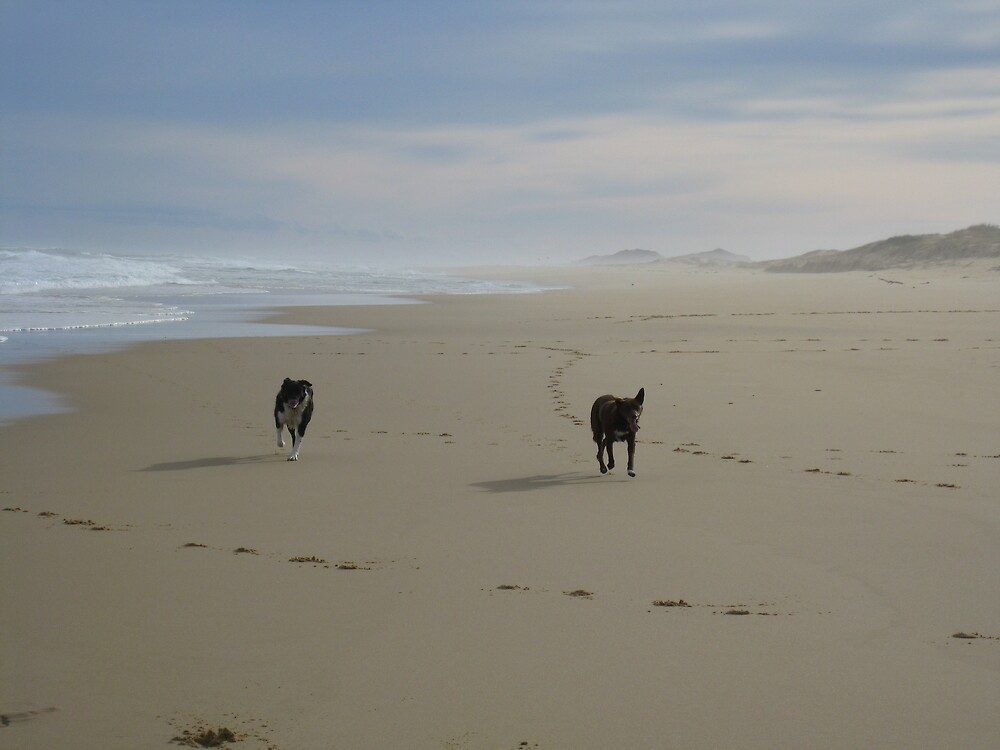 dogs at play by heathermc