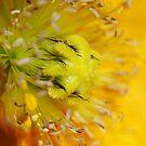 Yellow by sarah ward