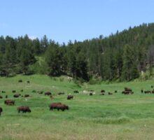Bison Buffalo Landscape Sticker