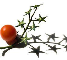 The stars' tree by Barbara  Corvino