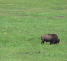 Grazing Buffalo Bison Sticker
